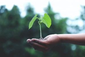 An illustration of care- photographed by Akil Mazumder, taken from https://www.pexels.com/photo/person-holding-a-green-plant-1072824/