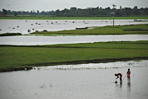 Climate change increases the frequency of floods due to tropical cyclones and rainfall. This is an image of agricultural lands in coastal Bangladesh